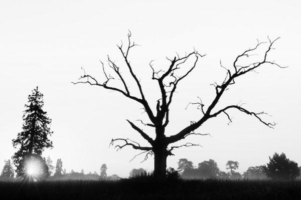 copaci uscati