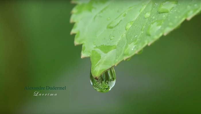 Lacrima – Alexandre Dudermel
