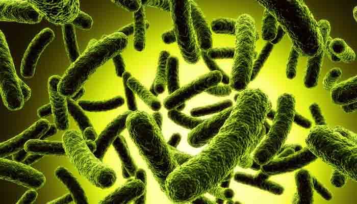 Microbii Ne Definesc Ca Persoane