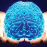 De Ce Este Special Creierul Omului?
